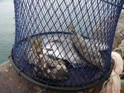 和歌山北港魚つり公園 天秤かご釣りでチヌ・アイゴ
