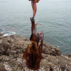 栖原の沖磯この秋初エギングへ 何とか420gをゲット
