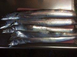 大阪南港魚つり園 タチウオワインドで1匹、バイブレーションで4匹