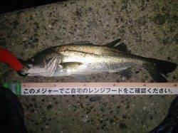 武庫川河口 鉄板系バイブで底を狙いバイト4本中シーバス2本ゲット