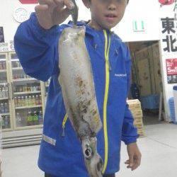 串本漁港にてエギング アオリイカ790gをお子様がキャッチ♪