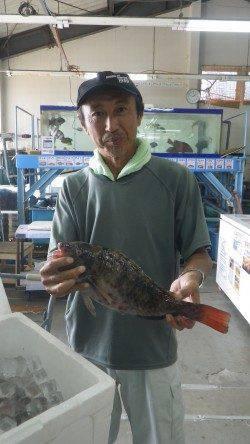 みなべ堺の沖磯 大島にてウキ釣り・ホンダワラでイガミ