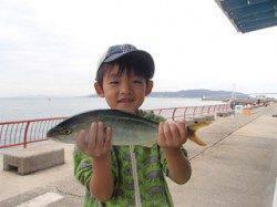 平磯海づり公園 シラサのウキ釣りでツバス