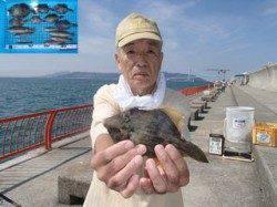 平磯海づり公園 胴突仕掛でカワハギ・ベラの釣果