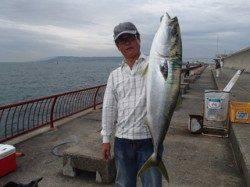 平磯海づり公園 アジをエサに記録賞サイズのブリ81cm!