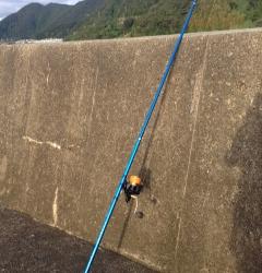 日置川河口半夜で投げ釣り チャリコの釣果