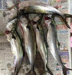 朝一便で神戸沖堤へ 朝一はタチウオ、空けてからはサゴシ祭り!