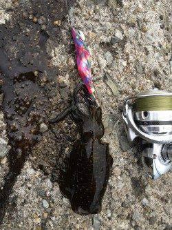 水軒で3時〜8時までのタチウオ釣行後エギングでアオリイカ