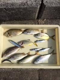 マリーナシティ海釣り公園 サビキで魚種多彩な釣果