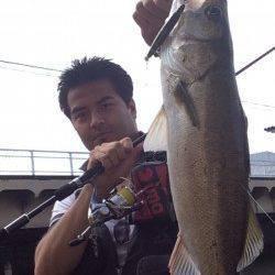 雨後の濁り入った石津川 ベイト少ない中でもシーバスHITで満足!