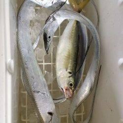 和歌山マリーナシティ ウキ釣りのタチウオは3時に時合い サビキで中アジも
