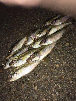 大阪南港 アジング釣行は高活性な状況