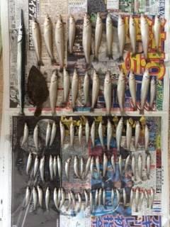 磯ノ浦 投げ釣りでキス78匹! ほかヒラメ・サヨリも釣れました