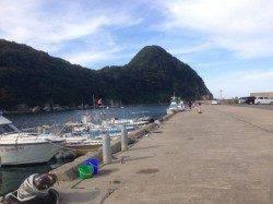 竹野港 エギングでアオリイカ 合間にルアーでチャリコもヒット