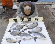 湾内の筏のチヌ釣果 30~47㎝を9匹