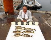 黒島の磯 アイゴ24〜35cmを7匹