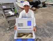 黒島の筏 良型アイゴを30匹