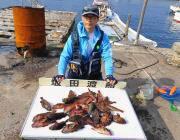 アジの切り身をエサにガシラ大漁