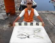 湾内の筏 チヌの釣果