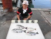 黒島の筏でチヌ&黒島の磯でイシダイの釣果