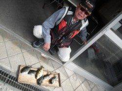 大磯 フカセ釣りでグレ・アイゴの釣果