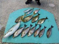 神谷沖一文字カゴ釣り釣果 青物も釣れています