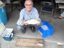 カマ磯にてノマセ釣りでシオの釣果