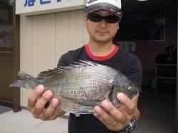 湯浅の磯 紀州釣りでのチヌ釣果