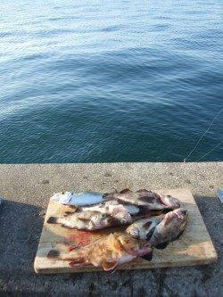 兵庫突堤 ウキ釣りでメバル・ガシラ