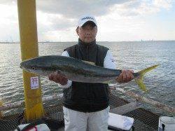活アジのノマセ釣りで83cm5kg!サビキではコノシロ