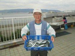 尼崎市立魚つり公園 サヨリ釣りが初めてでも数釣り楽しめたほど好調♪