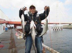 尼崎魚つり公園 フカセでチヌ43cm含め15匹 シラサにハネの反応が上昇中