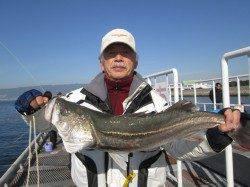 尼崎市立魚つり公園 エビ撒きの調子上向き、ズボ釣りでスズキ74.5cmも!