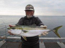 尼崎市立魚つり公園エビ撒き釣り セイゴ入れ食い状態!一発大物の期待も大