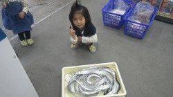 堺漁港 ワインド・ルアーでタチウオの釣果出てます