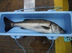 和歌山北港魚つり公園 チヌ・チャリコ・アイゴ・グレ・カワハギ