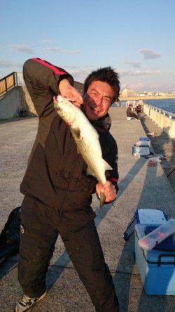 南芦屋浜に釣行 サヨリは断念しズボ釣りでボラ…サビキでアジなど