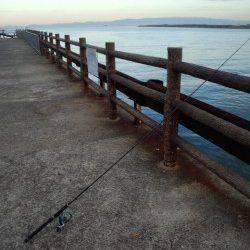 大津川河口高場 早朝の時合のワインドでタチウオ狙いに行ってきました