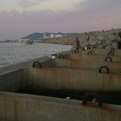 須磨 深夜12時から6時間のタチウオ釣行でほぼ入れ食い☆