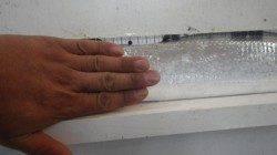 田辺芳養(はや)堤防でタチウオ95cm級 指4本サイズ