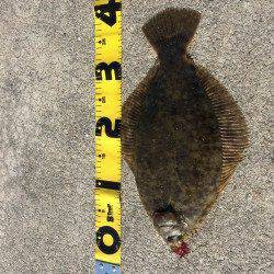 鰯浜漁港にて投げ釣り 激アタリを引き寄せあげてみるとカレイ38cm!!