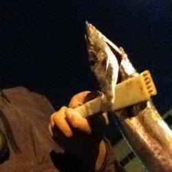 高砂埋立地周辺にて0時よりの釣行 落とし込みでタチウオの釣果