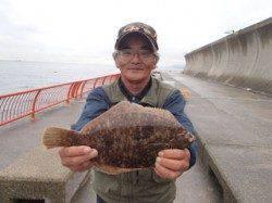 平磯海釣り公園 投げ釣りでカレイの釣果出てます