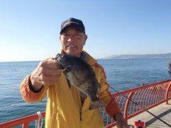 平磯海づり公園 シラサのウキ釣りで良型メバル25.5cm