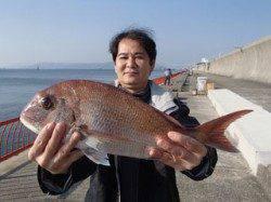 平磯海づり公園 シラサのウキ釣りでマダイ48cm