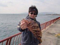 記録賞サイズのアコウ35.5cmが釣れました! 平磯海づり公園
