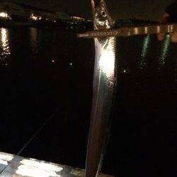 汐見埠頭にてタチウオ16匹 サンマのエサが食い込みよかったです♫