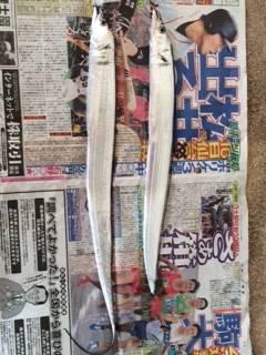 武庫川一文字 ワインドでタチウオ 青物は次回リベンジしたいです