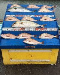 マリーナシティ海洋釣り堀 雨ですがカンパチ釣れました!