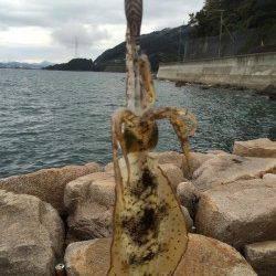 戸坂・塩津漁港 1時間のエギングでアオリイカの新子2ハイ